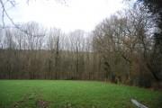 Mopesden Wood