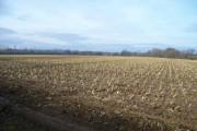 Huge field