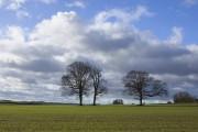 Fields west of Bainton, E Yorks