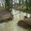 Swollen River Swift near Misterton