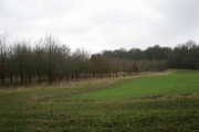 New woods between Edgerton's Wood and Morgaston Wood