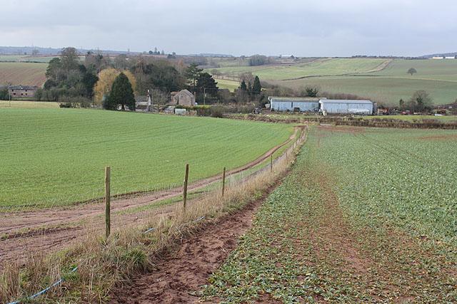 Footpath between two cropfields