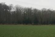 Broadwell Wood by Hoghole Lane