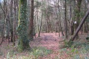 Beech woodland in Merton Plantation