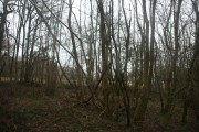 Clay Wood