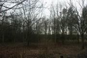 Woodland near Delaware Farm