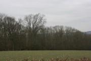 Woodland near Chiddingstone