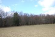 Milham Wood