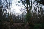 Millham Wood, Mountfield Lane