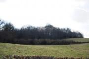 Spring Wood seen from Mountfield Lane