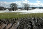 Farmland near Down House, Redmarley