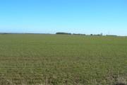 Farmland near Risby Grange