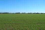 Platwoods Fields