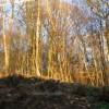 Snape Wood in winter sunshine