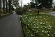 Snowdrops in Hawling