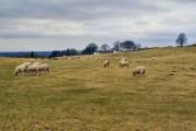 Farmland off Old Hall Lane