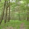 Frensham Common Country Park