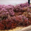 Heather flowerbeds at the Family Farm Services