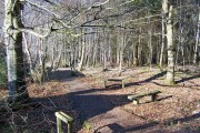 Benches in the wood