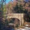 Forest railway bridge