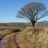Oak by the West Deane Way