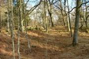 Woodland at Tenandry