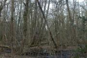 Leagreen, woodland