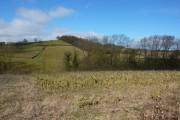 A corner of Parkhill Wood