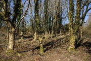 Late Winter Woodland