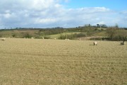 Farmland North of Thurgarton