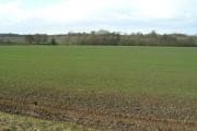 Farmland, Westhorpe Dumble