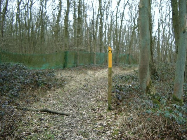 Footpath through Shawell Wood