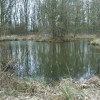 Pool in Shawell Wood