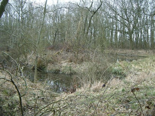 Small pond, Shawell Wood