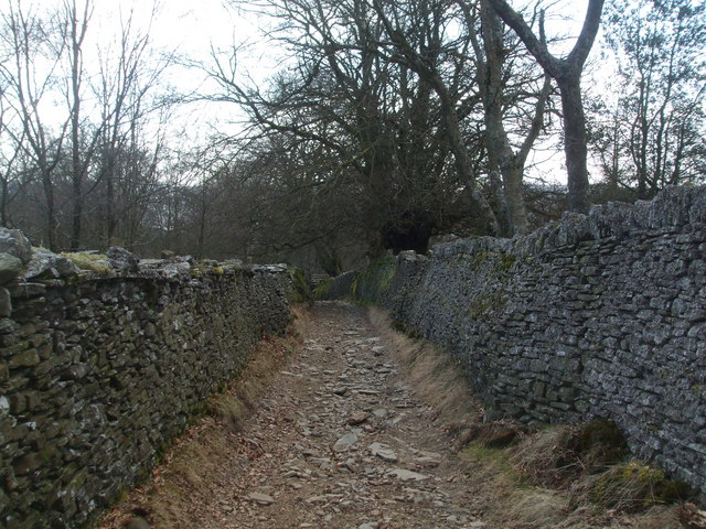 Old track leading to Gethin Forest