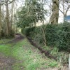 Hedge lined path