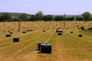Silage  Bales on farmland near Pangbourne