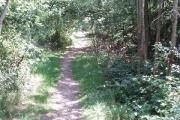 Woodland on Gerrards Cross Common