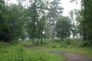 Hindhead Common