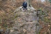 Beech woods Castle Coch