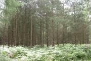 Flat Wood