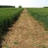 Farmland near Ampney St Peter