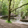 Cannop Brook