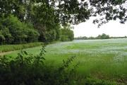 Farmland near Burghfield