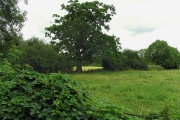 Farmland near Ufton Nervet