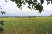 Farmland off Broxhill Road, Havering-atte-Bower, Essex