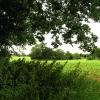Corn growing on Farmland near Wokefield