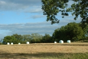 Plastic wrapped straw bales in a field adjacent to Collendean Lane