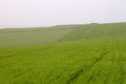 Martin's Down, near Long Bredy