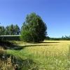 Wheatfield and Barn near Hill Bottom